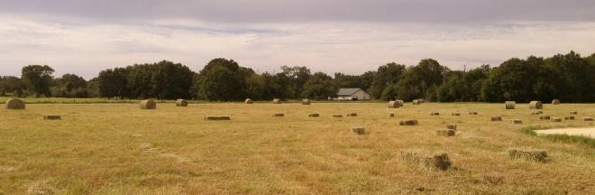 WhirldWorks Hay Field