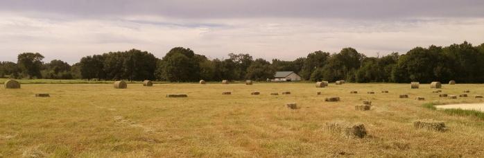 WhirldWorks Hay Field