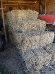 Hay in the barn
